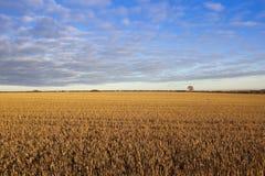 Wolkenmuster über goldener Stoppel Lizenzfreie Stockbilder