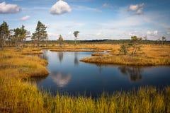 Wolkenreflexionen im Sumpfsee Stockbild
