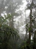Wolkenwald Stockfoto