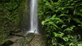 Wolkenwaldwasserfall stock video