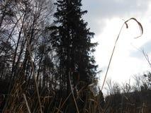 Wolkiges Wetter im Wald im Frühjahr Stockfotografie