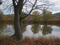 Wollüstiger Fluss-Baum Stockbild