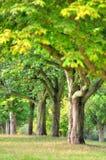 Wollaton Corridoio e parco Nottingham Nottingham, Regno Unito, Inghilterra fotografia stock libera da diritti