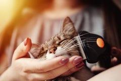 Wolle von der Katze heraus kämmen lizenzfreie stockbilder
