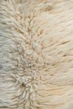 Wollen der weißen Schafe Stockfotos
