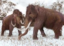 Wollige Mammoeten die in de Sneeuw weiden Stock Foto