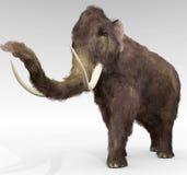Wolliges Mammut Stockfotografie