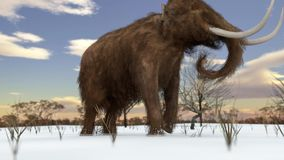 Wolliges Mammut, das in Snowy-Feld-Animation geht stock footage