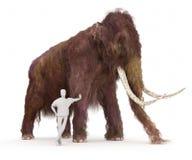 Wolliges Mammut und menschlicher Größen-Vergleich Stockfotos