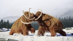 Wolliges Mammutstierkämpfen, prähistorische Eiszeitsäugetiere in Schnee umfaßter Landschaft stockbild
