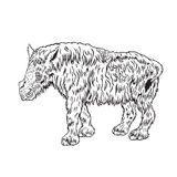 Wolliges Nashorn des Babys Stockbilder