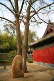 Wollongang Nanyang Arkivfoton