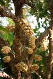 Wollongong fruit Stock Image