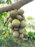 Wollongong populär frukt royaltyfri bild