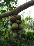 Wollongong populair fruit royalty-vrije stock foto