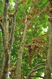 Wollongong sötsakfrukter, Arkivfoto