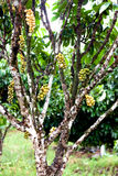 Wollongong träd Royaltyfria Bilder
