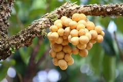 Wollongong  tropical fruit Stock Photos