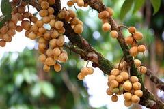Wollongong  tropical fruit Stock Photo