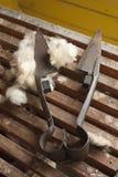 Wollscheren Stockbild
