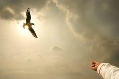 Wolność latający seagull zmierzch Zdjęcie Royalty Free