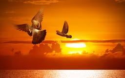 wolność skrzydła Fotografia Stock
