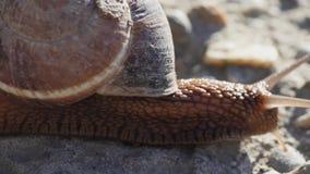 Wolny ślimaczek krzyżuje ulicę zbiory wideo