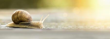 Wolny ślimaczka czołganie Fotografia Stock