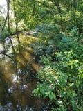 Wolny spływanie strumień w drewnach Fotografia Stock