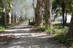 Wolontariuszi Czyścą miasto parka starzy liście od w zeszłym roku Zdjęcia Royalty Free