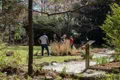 Wolontariuszi pracuje przy Łabędzimi Jeziornymi Irysowymi ogródami, Sumter, SC Zdjęcie Royalty Free