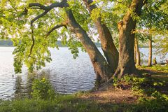 Wolsztyn, POLEN - ein malerischer Platz durch den See Lizenzfreies Stockbild