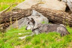 Wolve jaspisu park narodowy Fotografia Stock