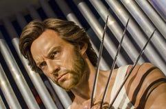 Wolverine Foto de Stock Royalty Free