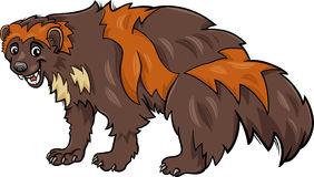 Wolverine animal cartoon illustration Stock Image