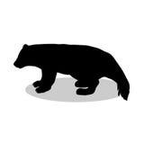 Wolverine bear wildlife black silhouette animal Royalty Free Stock Photos