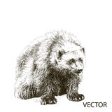 Wolverine sitting sketch vector. Graphics black and white drawing Stock Photo