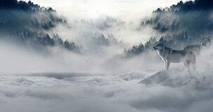 Wolves in foggy mountain Stock Photos