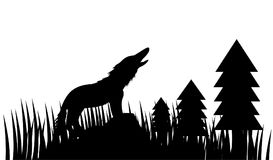 wolves in the forest stock images