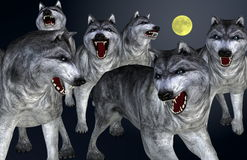 Wolves on full moon night. Menacing-looking wolves on full moon  night Royalty Free Stock Photography