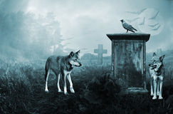 Wolves guarding an old Stock Image