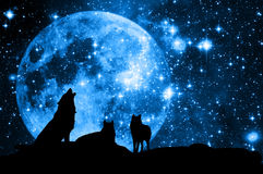Wolves and moon royalty free stock image