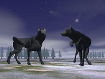 Wolves by night - 3D render Stock Images