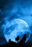 Wolves pack. Pack of wolves in silhouette in front of a big full moon, one of them howling Stock Images
