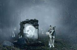 Wolves som skydd en gammal grav Arkivbilder