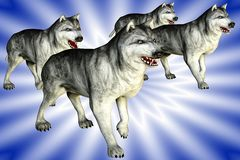 Wolves (Wolfs). Group of Wolvs, barking and attacking Stock Photo