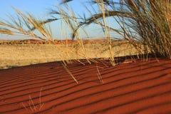 Wolwedans del bordo NR di Namib Fotografie Stock Libere da Diritti