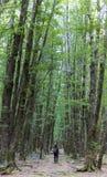 Wom adulto joven que camina en la trayectoria de bosque Imágenes de archivo libres de regalías