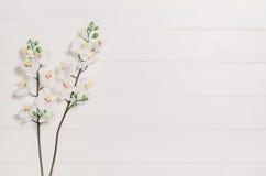 Woman& x27; таблица, стол или место для работы s увиденные сверху Предпосылка взгляд сверху с белым космосом древесины и экземпля Стоковое Фото