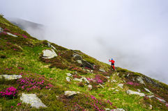 Woman in action, hiking in the mountains with nordic walking poles Royalty Free Stock Image